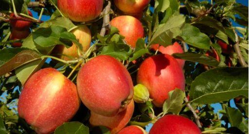 Fruit Tree Growing Guide | Tui Garden