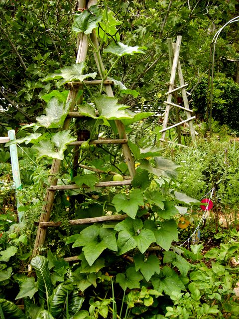 It is a truism of gardening that no matter what size our gardens are, we run out of space. The vegetable garden is no exception. Lured by pictures on seed packets, we plant until our gardens burst. A simple solution is to grow upwards.