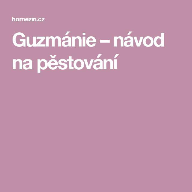 Guzmánie – návod na pěstování