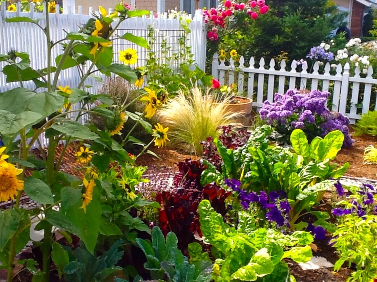 10 best images about lawn alternatives on pinterest for Beautiful vegetables