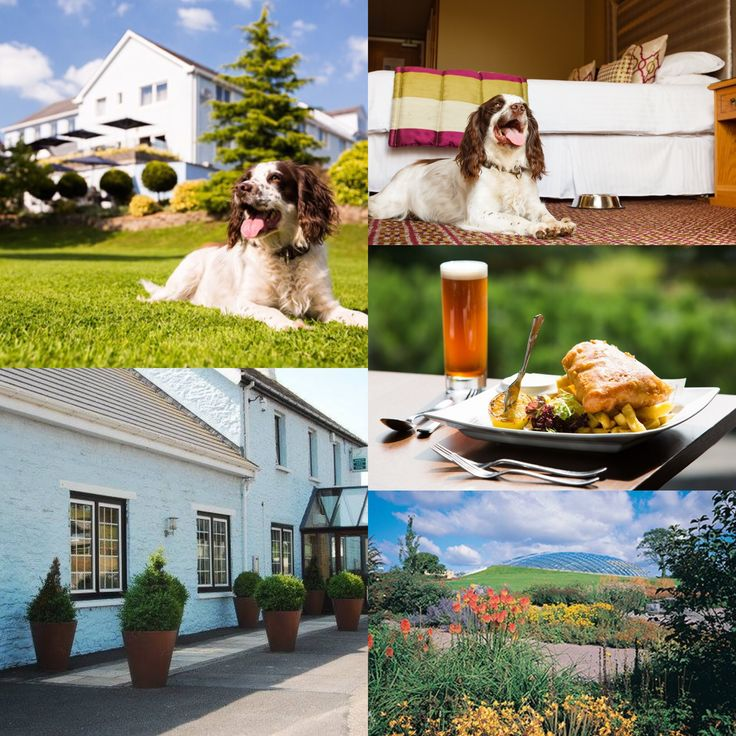 The Plough Hotel and Restaurant in Rhosmaen, Carmarthenshire offers 4 star boutique style, dog friendly accommodation https://dotty4paws.co.uk/businesses/listing/the-plough-hotel-and-restaurant/