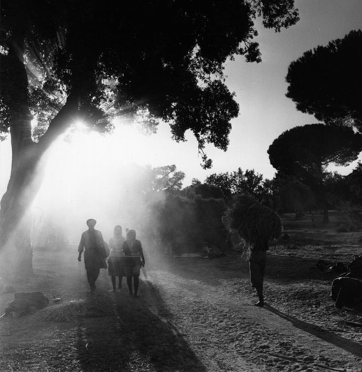 Bert Hardy Rice Harvest, Portugal, 1955 From Hulton Archive/Getty Images