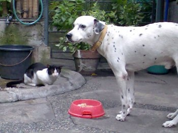 with his sneeky neighbor cat