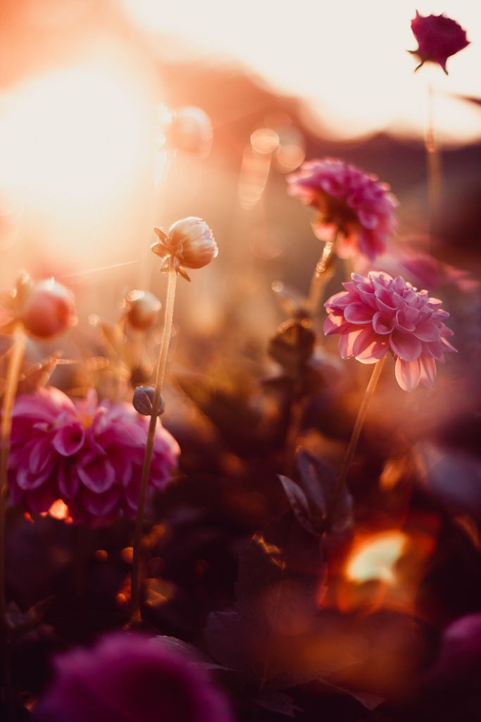 Found You Flower Background Wallpaper Flowers Photography Beautiful Flowers Wallpapers