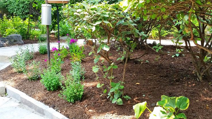 Perfect Plants to Place over Septic Systems Perfect