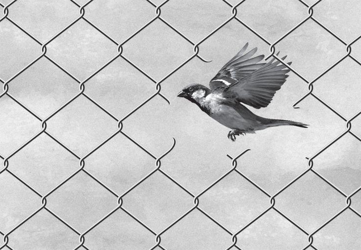 Vrijheid. Vogels zijn sterk verbonden met een gevoel van vrijheid. De huismus (Passer domesticus) is een kleine zangvogel, de zang van huismus beperkt zich doorgaans tot getjilp.