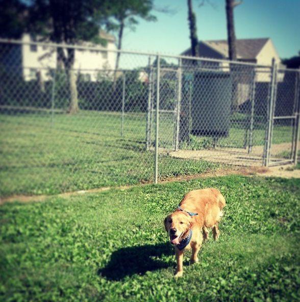 Off Leash Dog Parks Columbus Ohio