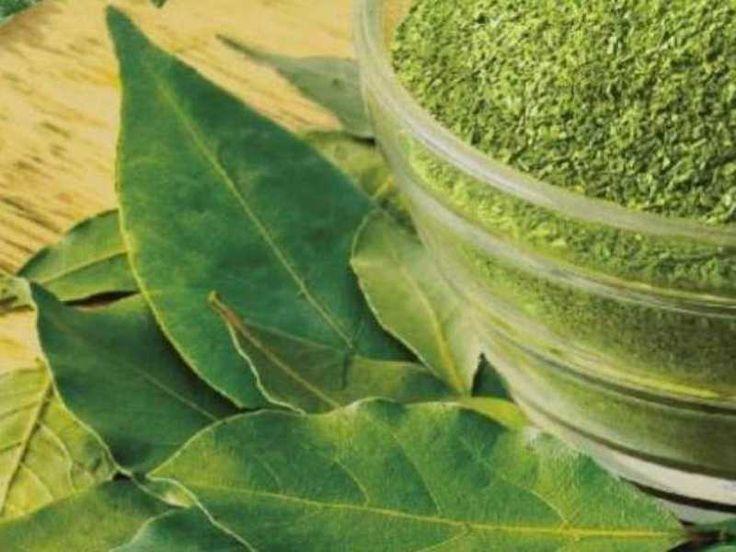 10 потрясающих свойств лаврового листа