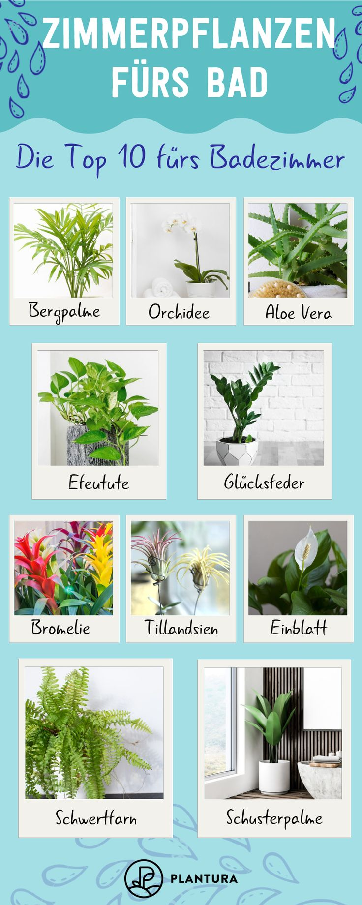 Plants for the bathroom: Our Top 10