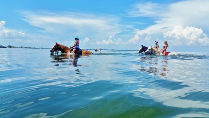 You've heard of horseback riding, but what about horseback swimming? Just off Tampa Bay!