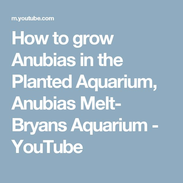 How to grow Anubias in the Planted Aquarium, Anubias Melt- Bryans Aquarium - YouTube