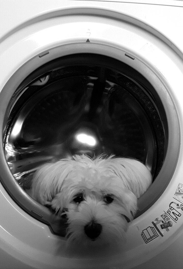 Wash at 30 °C  :-)
