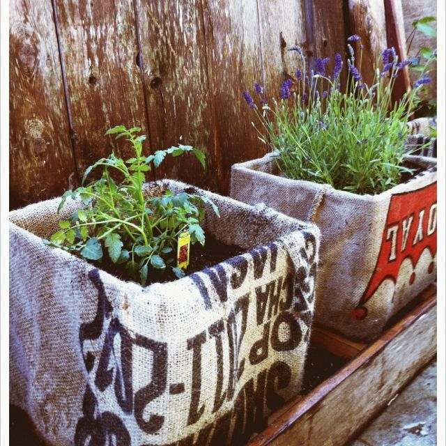 plastic milk crates + burlap coffee sacs = cute garden!