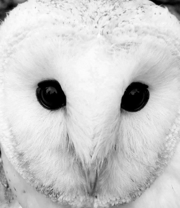 Owl Meanings in the Realms of Animal Symbolism The owl is ...