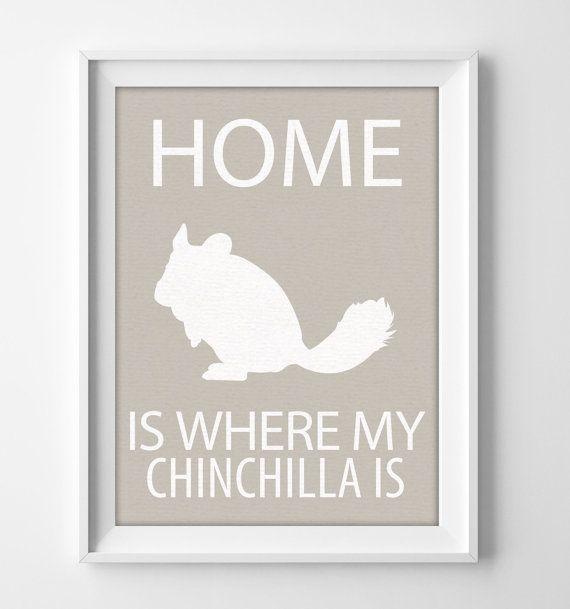 """8 x 10"""" Chinchilla Wall Art, cadeau de Chinchilla, Chinchilla Decor, impression de Chinchilla, Chinchilla Pet, Noël Chinchilla, Chinchilla anniversaire"""