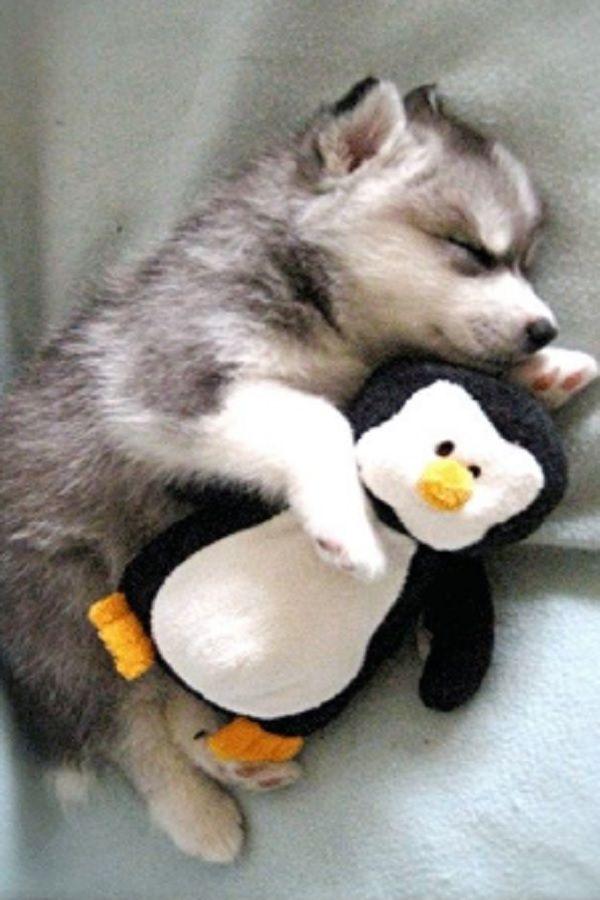 Shared Kittens For Sale Near Me Craigslist Cute Animals