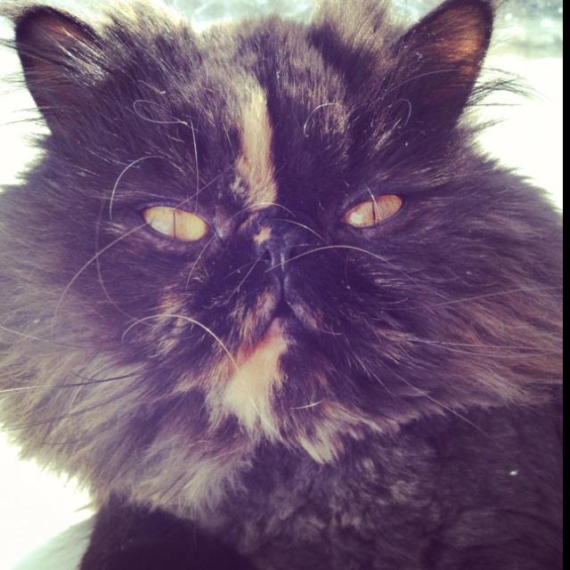 my princess Tasha