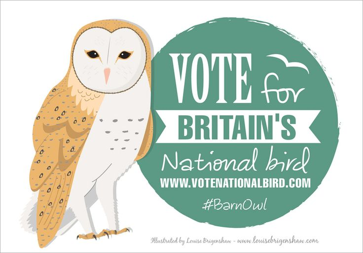 Barn Owl illustration by Louise Brigenshaw for Britain's National Bird campaign
