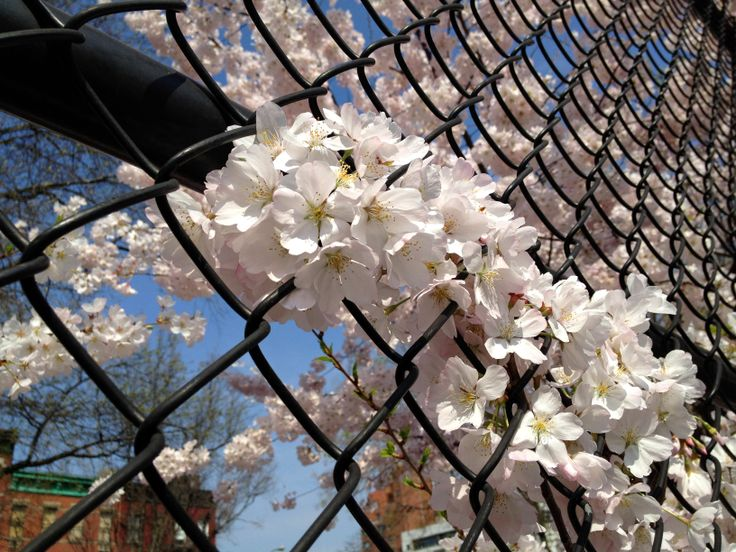 18 Best Cyclone Fence Makeover Images On Pinterest