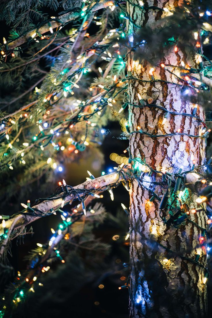 Christmas Tree decorated with colored lights in Truckee Tahoe  #travel #california #tahoe #hotel #ritzcarlton #truckee #ski #snow #northstar #restaurant