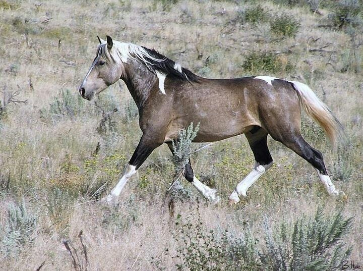 Mustang horse painting - photo#52