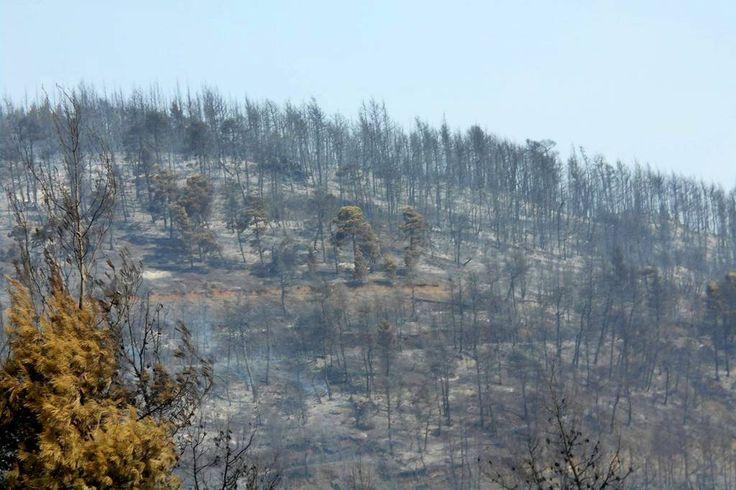 «Θεωρίες συνωμοσίας» για τη φωτιά στη Λίμνη Ευβοίας;
