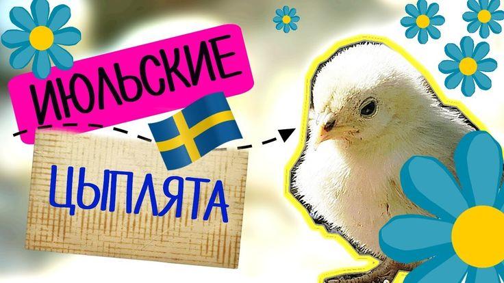 Июльские цыплята • Детский влог • Hembyggsparken • Прогулки по Швеции • ...