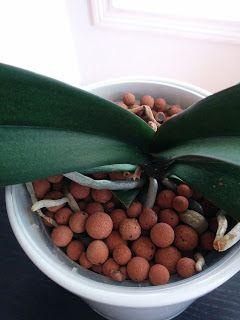 Orkidece : Farkli bir topraklama; Kil Tanecikleri (Clay Pellets)