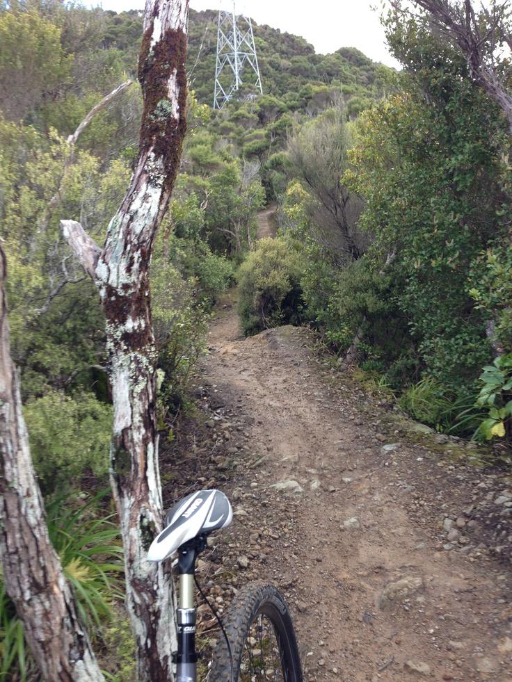 Wainuimata trails