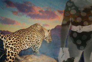 Leopard with a Swimmer, collage, 60 x 46 cm, 2005