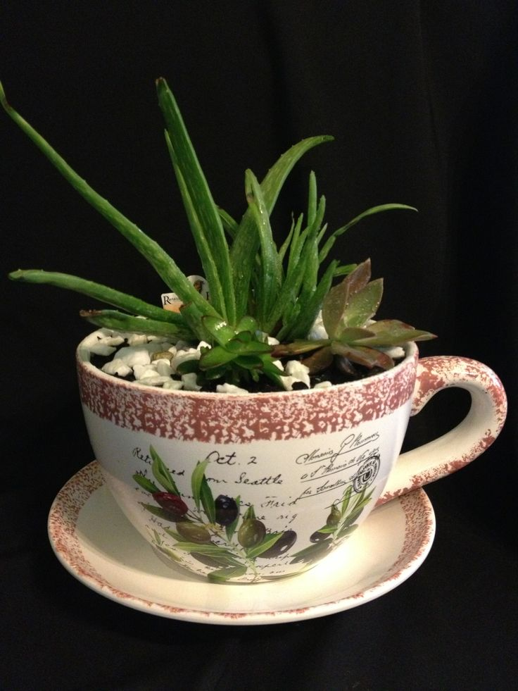 cup and saucer succulent planter