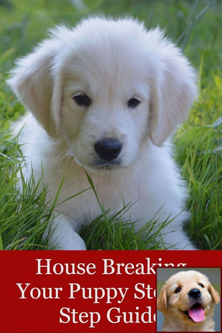 House Training A Puppy From Paper To Outside And Dog Behavior