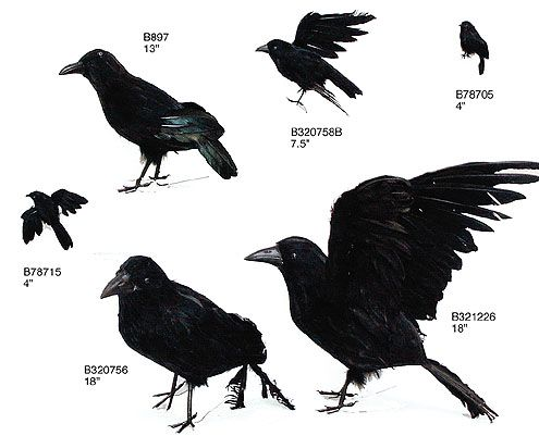 crows - Halloween Crows