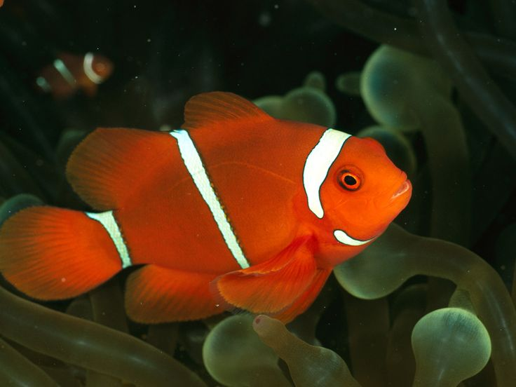 Fish Verites In Live - Saferbrowser Yahoo Image Search Results
