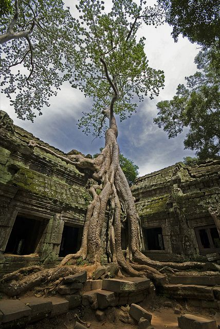 Angkor Wat in Cambodia  It's beautiful when nature begins to take over architecture. I want to climb this tree...  #neverhaveiever @StudentUniverse