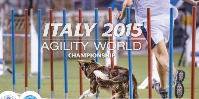 Sélection des candidats aux sélectifs European Open et Equipe de France 2015 - #agility #agilitydog #France