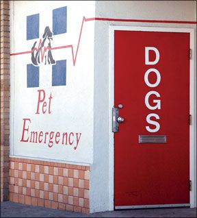Why pet health insurance is a good idea, and how to choose a plan - tips from the Whole Dog Journal