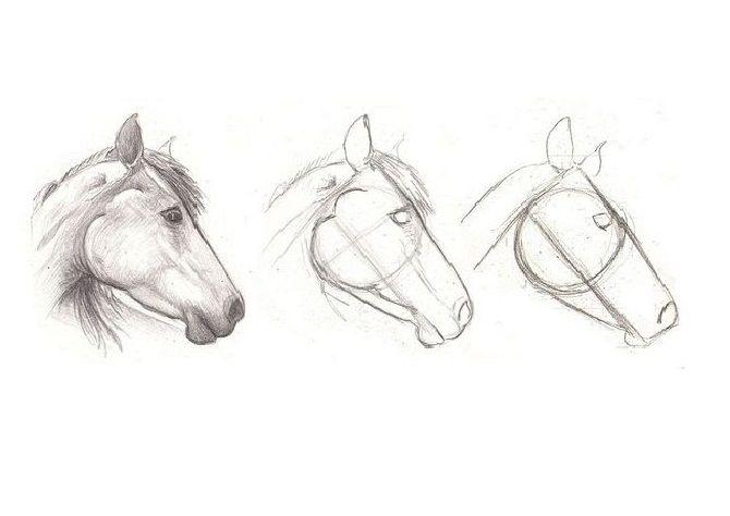 Como Dibujar Un Caballo 7 Pasos Talento Doncomos Com Como Dibujar Un Caballo Dibujos De Caballos Dibujo Caballo Lapiz