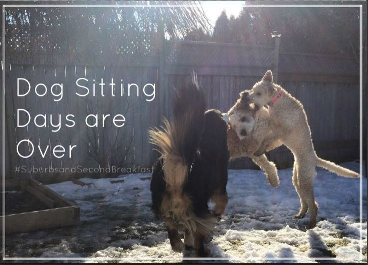 """Dog Sitting Days are Over""    #SuburbsandSecondBreakfast #lifestyle #personal #blog #dogs #dogsitting"