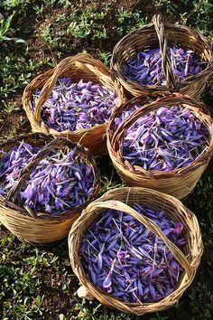 Zafferano,rimedio per Alzheimer,dolori, mestruazioni,depressione studio naturopatico donadoni www.blognaturopatia.com