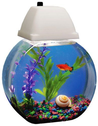 13 curated fish water tanks by valerie l ideas by for Fish bowl drinks near me
