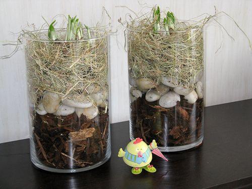 Het voorjaar is begonnen, dus is het ook weer tijd om de planten in huis weer is op te frissen en eventueel te vervangen. Maak eenvoudig je eigen voorjaarsstuk. Een glazen cilindervaas heb ik gevul...