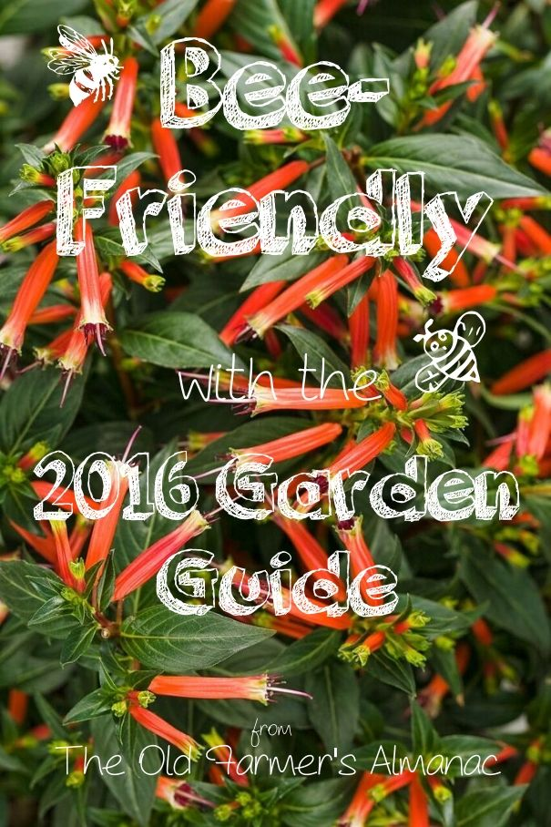 17 Best 1000 images about 2017 Garden Guide on Pinterest Gardens The