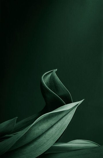 Dark bottle green (color pass number 7) Kerstin Tomancok / color, type, style …