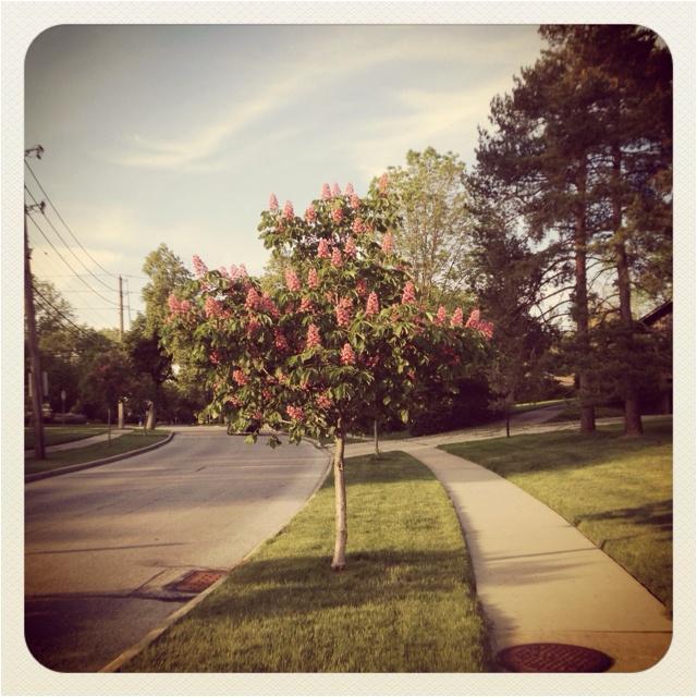 My neighborhood -Beachwood OH
