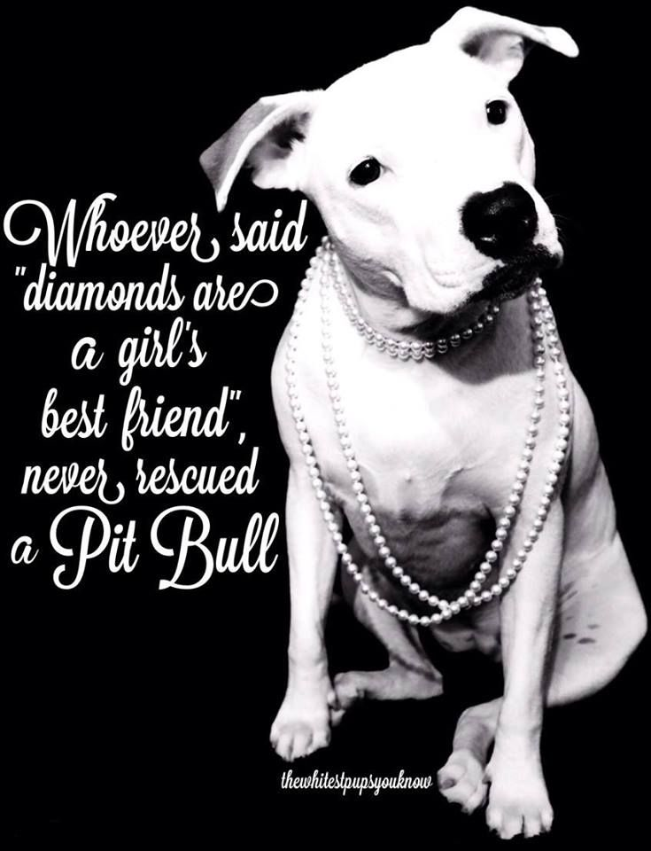 I would rather have my rescued Pit Bull than diamonds any day!