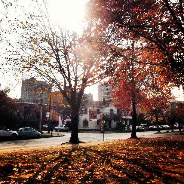 my autumn ~