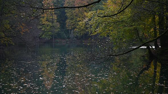 Yellow Autumn Leaves on The Lake 2