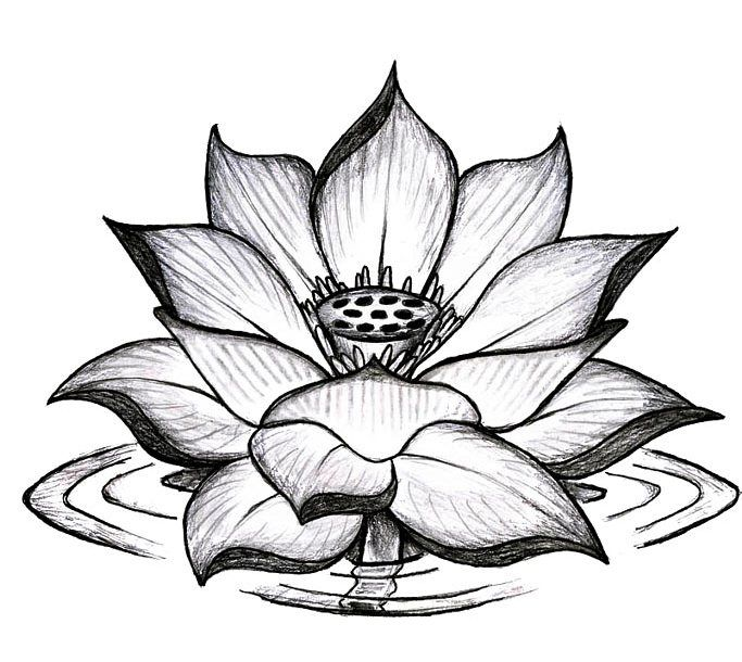 26 best elephant lotus flower and butterfly tattoo images for Lotus flower and butterfly tattoo designs