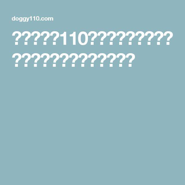 ワンちゃん110番 ドックフードの選び方と無添加ドックフード